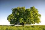 drzewa-117