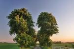 drzewa-118