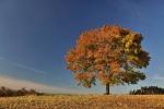 drzewa-114