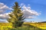 drzewa-112