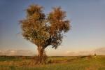 drzewa-10