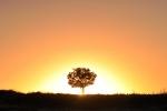 drzewa-97