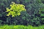 drzewa-16