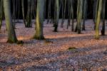 drzewa-108