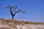 drzewa-94