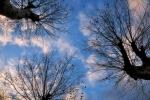 drzewa-88