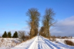 drzewa-100