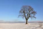 drzewa-99