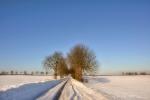 drzewa-98