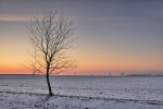 drzewa-95