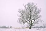 drzewa-91