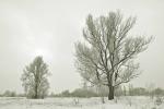 drzewa-93