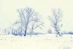 drzewa-92