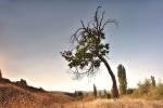 drzewa-104