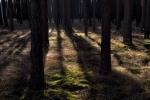 drzewa-81