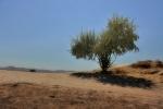 drzewa-103