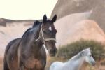 konie-23