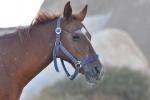 konie-21