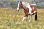 konie-20