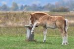 konie-26