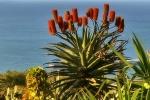 Ogrod botaniczny-30
