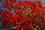 Ogrod botaniczny-27