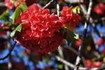 Ogrod botaniczny-26