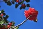 Ogrod botaniczny-25