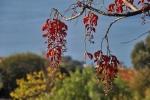 Ogrod botaniczny-24