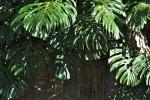 Ogrod botaniczny-15