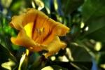 Ogrod botaniczny-10