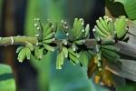 Ogrod botaniczny-9