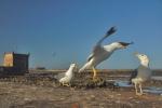 ptaki-119