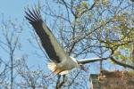 ptaki-118