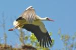 ptaki-113
