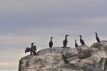 Ptasie wyspy-3