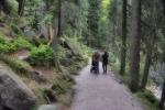 Schwarzwald-8